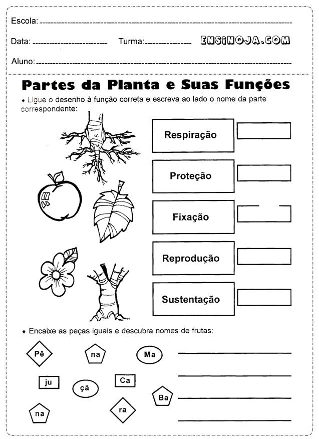 Partes das plantas e suas funções