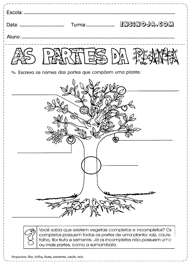 Escreva o nome das partes que compõe uma planta