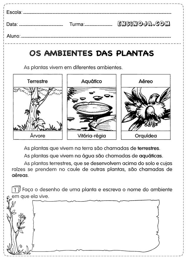 Ambiente das plantas
